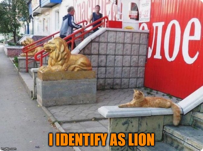 Hear Me Meowr! | I IDENTIFY AS LION | image tagged in memes,cat,lion,gender,gender identity | made w/ Imgflip meme maker