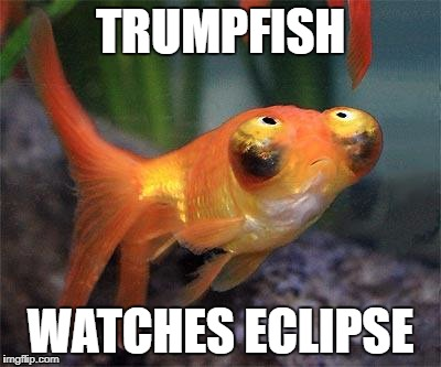 TRUMPFISH WATCHES ECLIPSE | image tagged in trump,eclipse 2017 | made w/ Imgflip meme maker