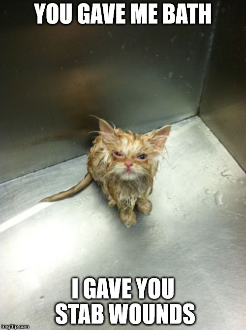 Kill You Cat | YOU GAVE ME BATH I GAVE YOU STAB WOUNDS | image tagged in memes,kill you cat | made w/ Imgflip meme maker