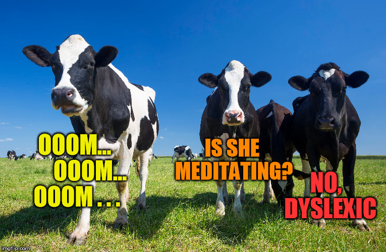 (o_O) | OOOM...       OOOM... OOOM . . . NO,  DYSLEXIC IS SHE MEDITATING? | image tagged in cow,meditate,dyslexic | made w/ Imgflip meme maker
