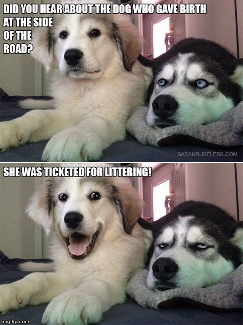 Get it... because a dog has a litter...? I'll leave now. | image tagged in bad pun | made w/ Imgflip meme maker