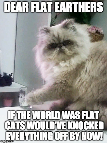 Inconvenient Truth | DEAR FLAT EARTHERS IF THE WORLD WAS FLAT CATS WOULD'VE KNOCKED EVERYTHING OFF BY NOW! | image tagged in cats,mean cats,funny,flat earth | made w/ Imgflip meme maker