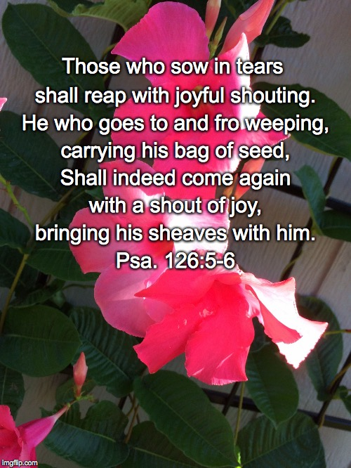 Those who sow in tears shall reap with joyful shouting. He who goes to and fro weeping, carrying his bag of seed, Shall indeed come again wi | image tagged in shout of joy | made w/ Imgflip meme maker