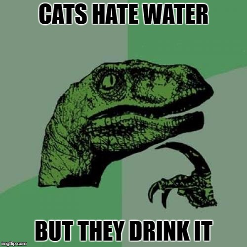 Philosoraptor Meme | CATS HATE WATER BUT THEY DRINK IT | image tagged in memes,philosoraptor | made w/ Imgflip meme maker