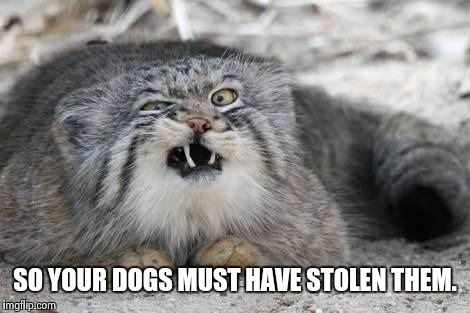 Ew kitty cat | SO YOUR DOGS MUST HAVE STOLEN THEM. | image tagged in ew kitty cat | made w/ Imgflip meme maker