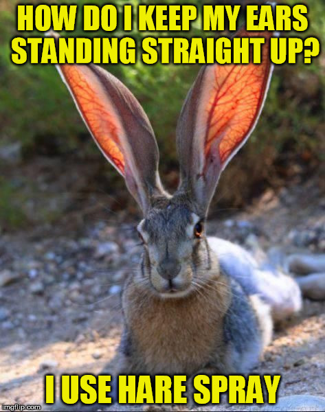 HOW DO I KEEP MY EARS STANDING STRAIGHT UP? I USE HARE SPRAY | made w/ Imgflip meme maker