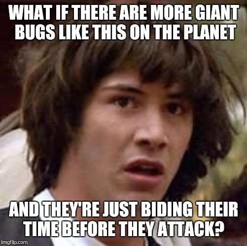Conspiracy Keanu Meme | WHAT IF THERE ARE MORE GIANT BUGS LIKE THIS ON THE PLANET AND THEY'RE JUST BIDING THEIR TIME BEFORE THEY ATTACK? | image tagged in memes,conspiracy keanu | made w/ Imgflip meme maker