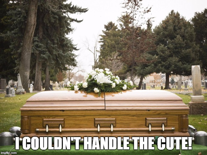 I COULDN'T HANDLE THE CUTE! | made w/ Imgflip meme maker
