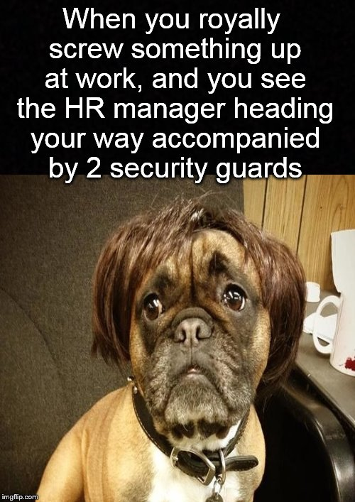 The end is near.... | When you royally screw something up at work, and you see the HR manager heading your way accompanied by 2 security guards | image tagged in at work,work,job,fired,dog,you're fired | made w/ Imgflip meme maker