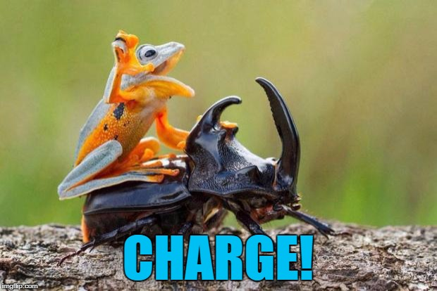 The battle for the forest had begun... :) | CHARGE! | image tagged in frog riding beetle,memes,animals,frog,beetle | made w/ Imgflip meme maker