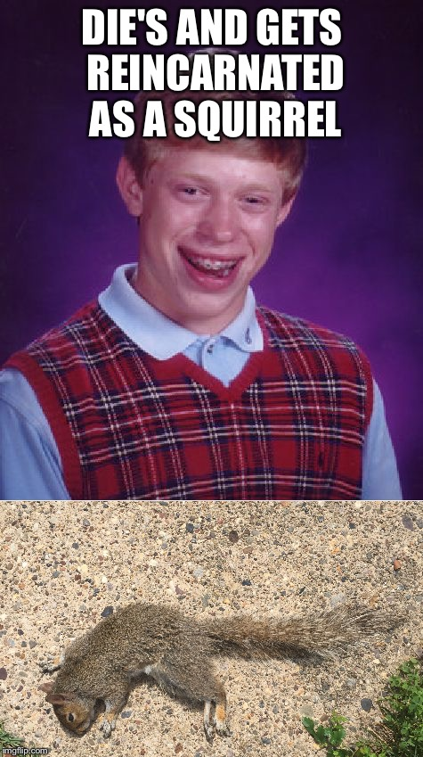 DIE'S AND GETS REINCARNATED AS A SQUIRREL | image tagged in memes,bad luck brian,squirrel,dead | made w/ Imgflip meme maker