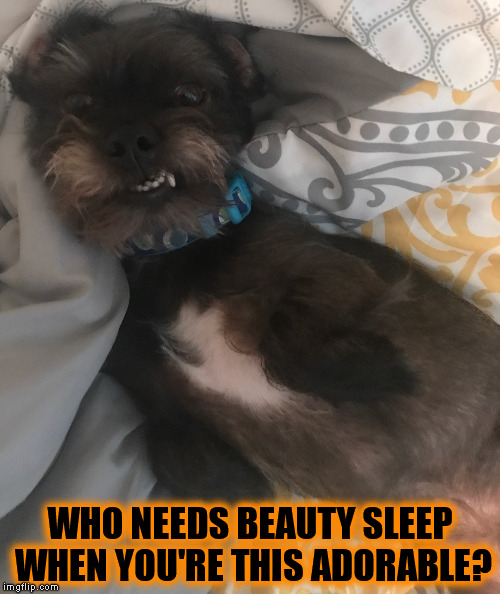 WHO NEEDS BEAUTY SLEEP WHEN YOU'RE THIS ADORABLE? | image tagged in lazy pup,adorable,sleepy,dog,cute doge,beauty sleep | made w/ Imgflip meme maker