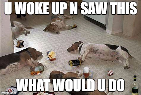 Drunk dogs after party | U WOKE UP N SAW THIS WHAT WOULD U DO | image tagged in drunk dogs after party | made w/ Imgflip meme maker