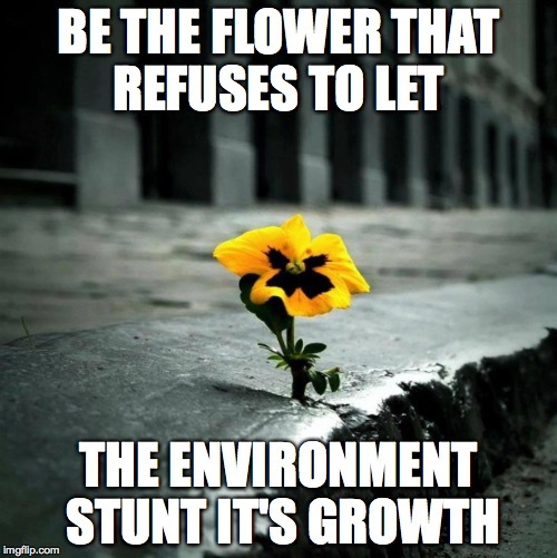 BE THE FLOWER THAT REFUSES TO LET THE ENVIRONMENT STUNT IT'S GROWTH | image tagged in growth,flowers | made w/ Imgflip meme maker