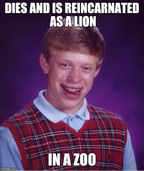 Bad Luck Brian Meme | DIES AND IS REINCARNATED AS A LION IN A ZOO | image tagged in memes,bad luck brian | made w/ Imgflip meme maker