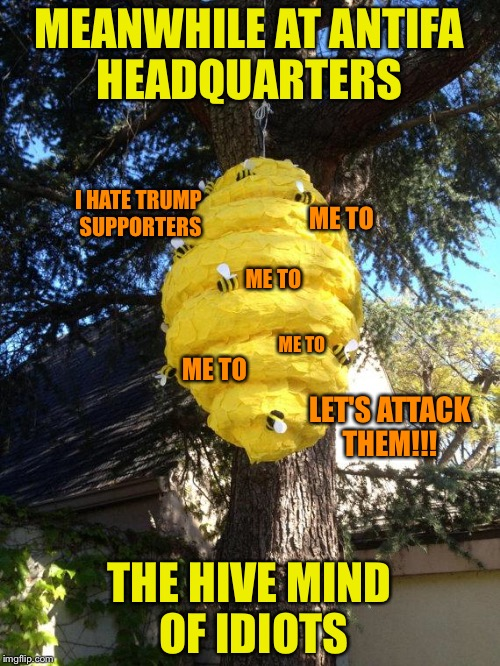 bees to my pinata | MEANWHILE AT ANTIFA HEADQUARTERS THE HIVE MIND OF IDIOTS I HATE TRUMP SUPPORTERS ME TO ME TO ME TO ME TO LET'S ATTACK THEM!!! | image tagged in bees to my pinata | made w/ Imgflip meme maker
