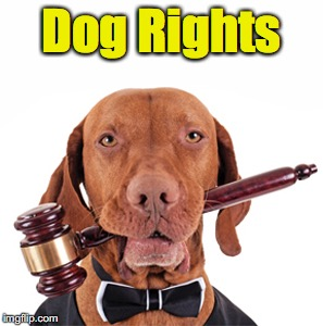 Dog Rights | made w/ Imgflip meme maker