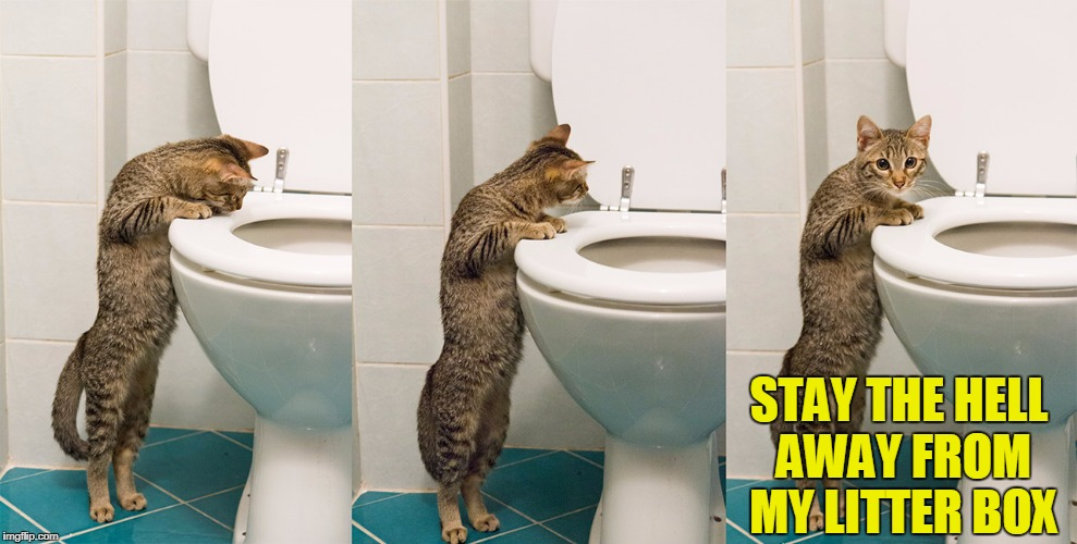 female cats spray urine