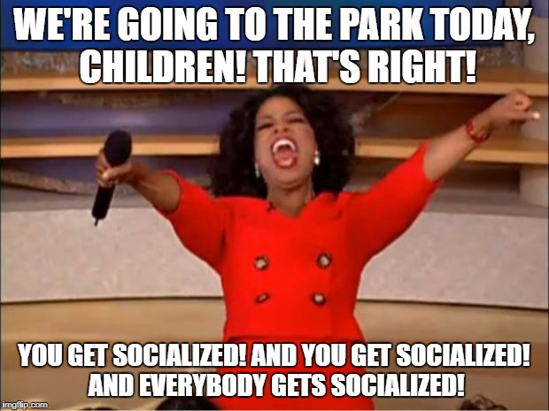 Oprah You Get A Meme | WE'RE GOING TO THE PARK TODAY, CHILDREN! THAT'S RIGHT! YOU GET SOCIALIZED! AND YOU GET SOCIALIZED! AND EVERYBODY GETS SOCIALIZED! | image tagged in memes,oprah you get a | made w/ Imgflip meme maker