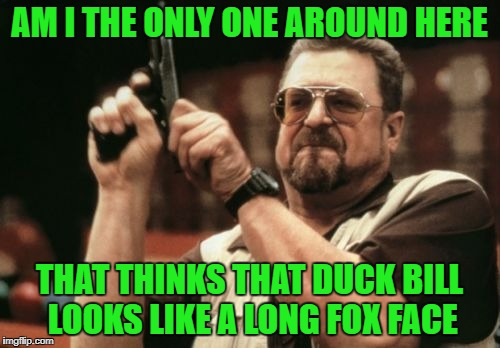 Am I The Only One Around Here Meme | AM I THE ONLY ONE AROUND HERE THAT THINKS THAT DUCK BILL LOOKS LIKE A LONG FOX FACE | image tagged in memes,am i the only one around here | made w/ Imgflip meme maker