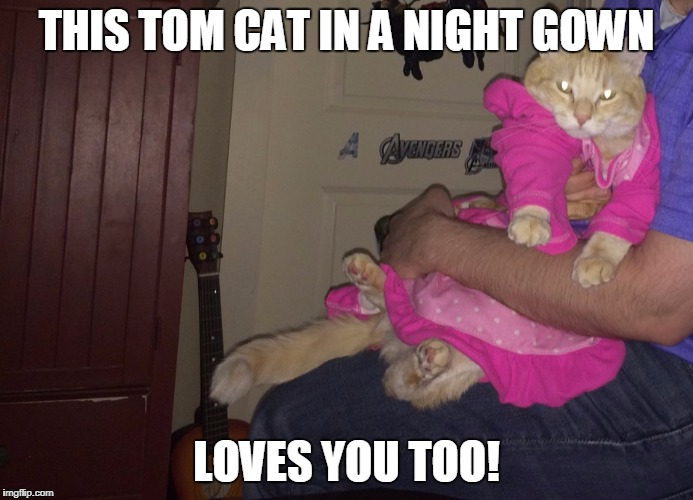 Pajama Cat Homer | THIS TOM CAT IN A NIGHT GOWN LOVES YOU TOO! | image tagged in pajama cat homer | made w/ Imgflip meme maker
