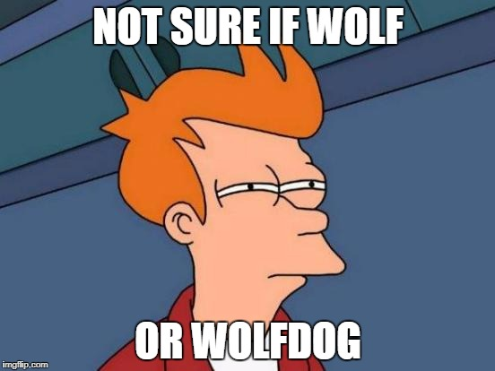 Futurama Fry Meme | NOT SURE IF WOLF OR WOLFDOG | image tagged in memes,futurama fry | made w/ Imgflip meme maker