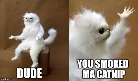 DUDE YOU SMOKED MA CATNIP | made w/ Imgflip meme maker