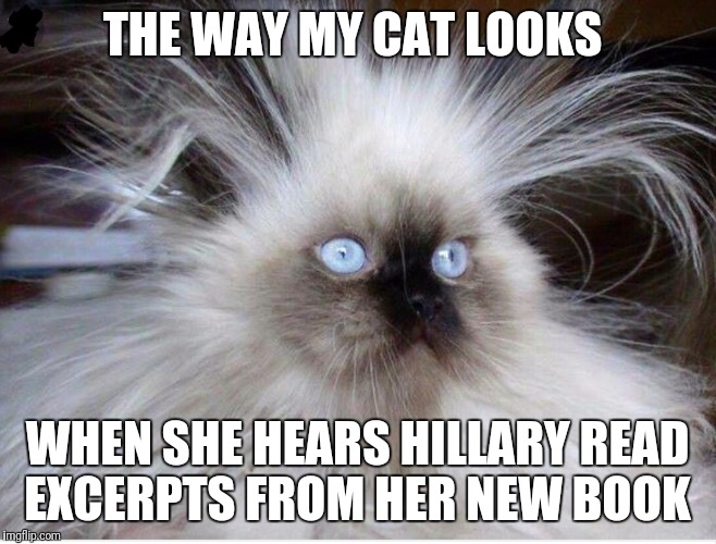 THE WAY MY CAT LOOKS WHEN SHE HEARS HILLARY READ EXCERPTS FROM HER NEW BOOK | image tagged in frazzled over politics | made w/ Imgflip meme maker