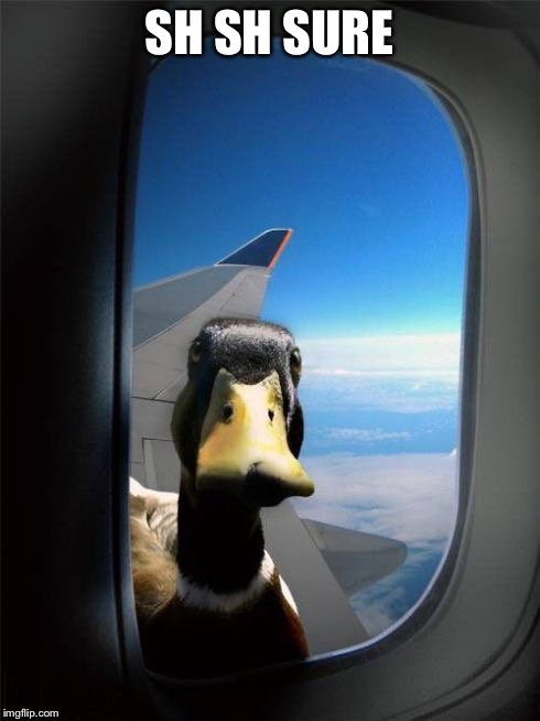 Let Me In Duck | SH SH SURE | image tagged in let me in duck | made w/ Imgflip meme maker
