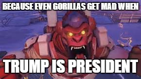 winston | BECAUSE EVEN GORILLAS GET MAD WHEN TRUMP IS PRESIDENT | image tagged in winston | made w/ Imgflip meme maker