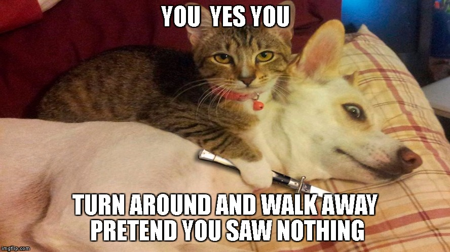 YOU  YES YOU TURN AROUND AND WALK AWAY PRETEND YOU SAW NOTHING | image tagged in killer cat | made w/ Imgflip meme maker