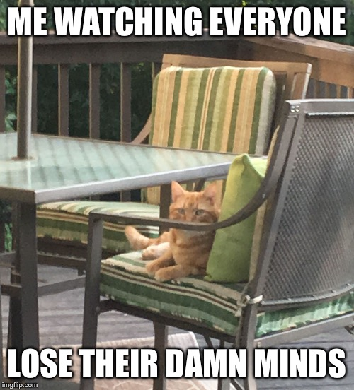 ME WATCHING EVERYONE LOSE THEIR DAMN MINDS | image tagged in buddy the judgemental cat | made w/ Imgflip meme maker