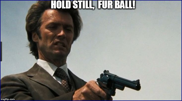 HOLD STILL,  FUR BALL! | made w/ Imgflip meme maker