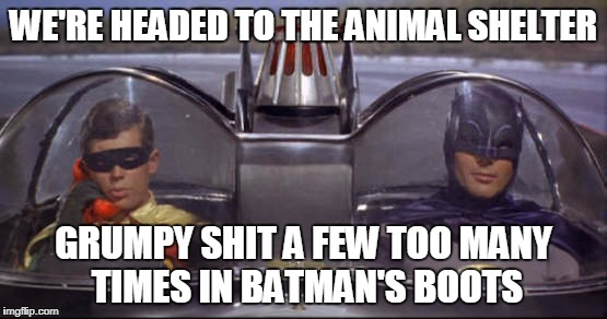 WE'RE HEADED TO THE ANIMAL SHELTER GRUMPY SHIT A FEW TOO MANY TIMES IN BATMAN'S BOOTS | made w/ Imgflip meme maker