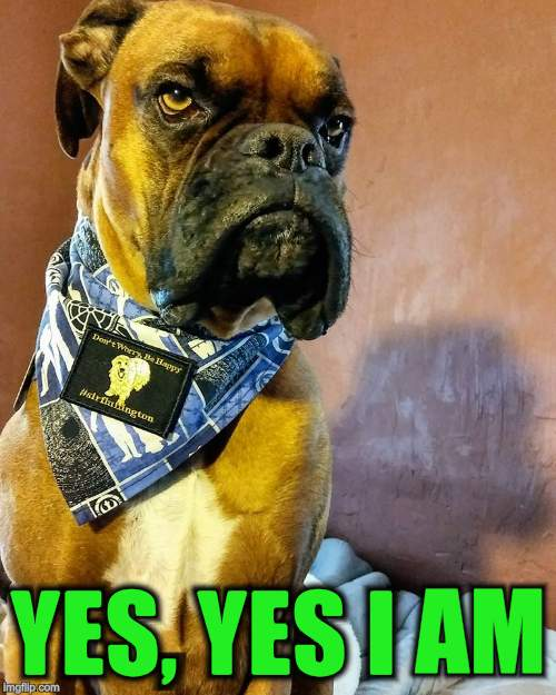 Grumpy Dog | YES, YES I AM | image tagged in grumpy dog | made w/ Imgflip meme maker