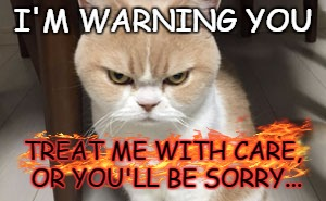 I'M WARNING YOU TREAT ME WITH CARE, OR YOU'LL BE SORRY... | image tagged in cats,angry cats | made w/ Imgflip meme maker