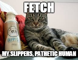 FETCH MY SLIPPERS, PATHETIC HUMAN | made w/ Imgflip meme maker