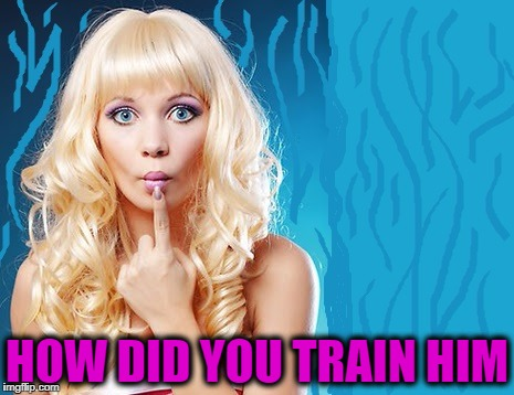 ditzy blonde | HOW DID YOU TRAIN HIM | image tagged in ditzy blonde | made w/ Imgflip meme maker