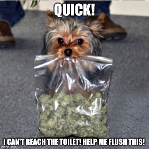 QUICK! I CAN'T REACH THE TOILET! HELP ME FLUSH THIS! | made w/ Imgflip meme maker