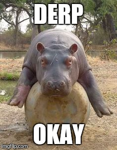 Happy hippo | DERP OKAY | image tagged in happy hippo | made w/ Imgflip meme maker