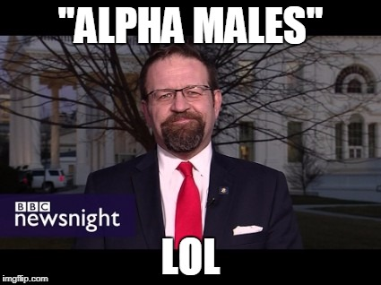 """ALPHA MALES"" LOL 