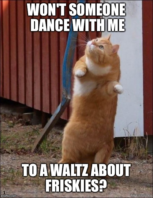 dancing cat | WON'T SOMEONE DANCE WITH ME TO A WALTZ ABOUT FRISKIES? | image tagged in dancing cat | made w/ Imgflip meme maker