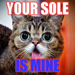 YOUR SOLE; IS MINE | image tagged in lil bub | made w/ Imgflip meme maker