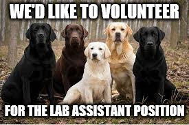 WE'D LIKE TO VOLUNTEER FOR THE LAB ASSISTANT POSITION | made w/ Imgflip meme maker