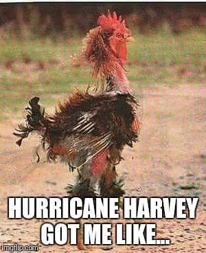 Hurricane Harvey | HURRICANE HARVEY GOT ME LIKE... | image tagged in hurricane harvey | made w/ Imgflip meme maker