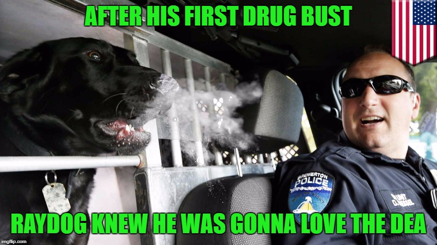 AFTER HIS FIRST DRUG BUST RAYDOG KNEW HE WAS GONNA LOVE THE DEA | made w/ Imgflip meme maker