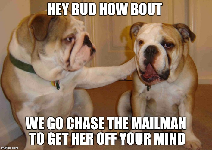HEY BUD HOW BOUT WE GO CHASE THE MAILMAN TO GET HER OFF YOUR MIND | image tagged in bulldog | made w/ Imgflip meme maker