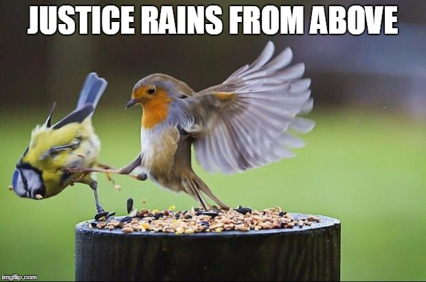 phara wannabe | JUSTICE RAINS FROM ABOVE | image tagged in birds | made w/ Imgflip meme maker