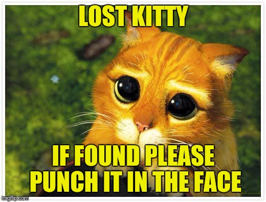 Sorry Kitty | LOST KITTY IF FOUND PLEASE PUNCH IT IN THE FACE | image tagged in sorry kitty | made w/ Imgflip meme maker