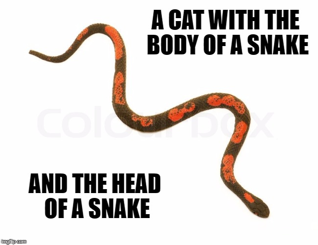 A CAT WITH THE BODY OF A SNAKE AND THE HEAD OF A SNAKE | image tagged in snake,cat,snakecat,meme,animal,body | made w/ Imgflip meme maker